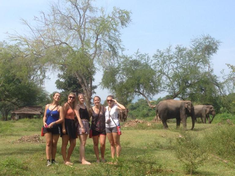 elephant group shot
